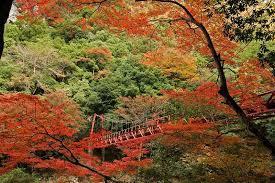 秋の紅葉 長門峡